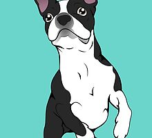 Boston Terrier Time!  by Molly Williams