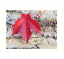 Red Leaf on Brickwork Art Print