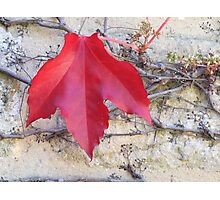 Red Leaf on Brickwork Photographic Print