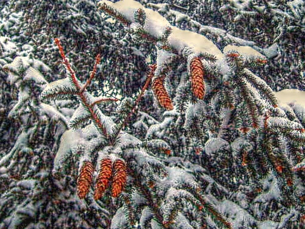 Pine Cones In The Snow by Jane Neill-Hancock
