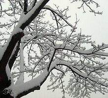 Snow Covered Branches by Jane Neill-Hancock