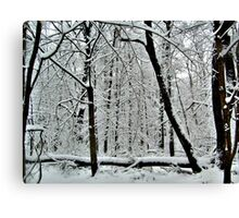 God Painting The Forest With Snow Canvas Print