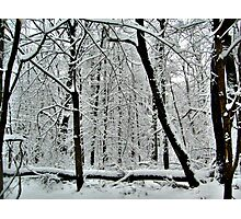 God Painting The Forest With Snow Photographic Print