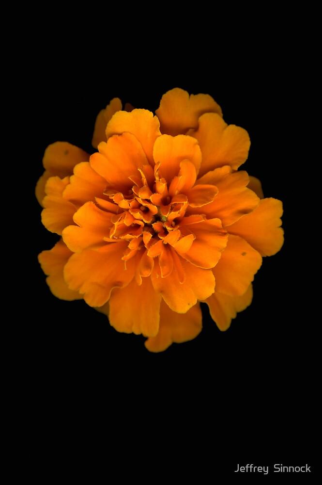 merrygold in orange by Jeffrey  Sinnock