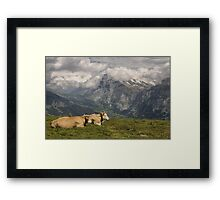 Cows with a View Framed Print