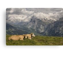 Cows with a View Canvas Print