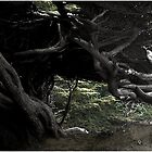 Cypress Freeway by Wayne King