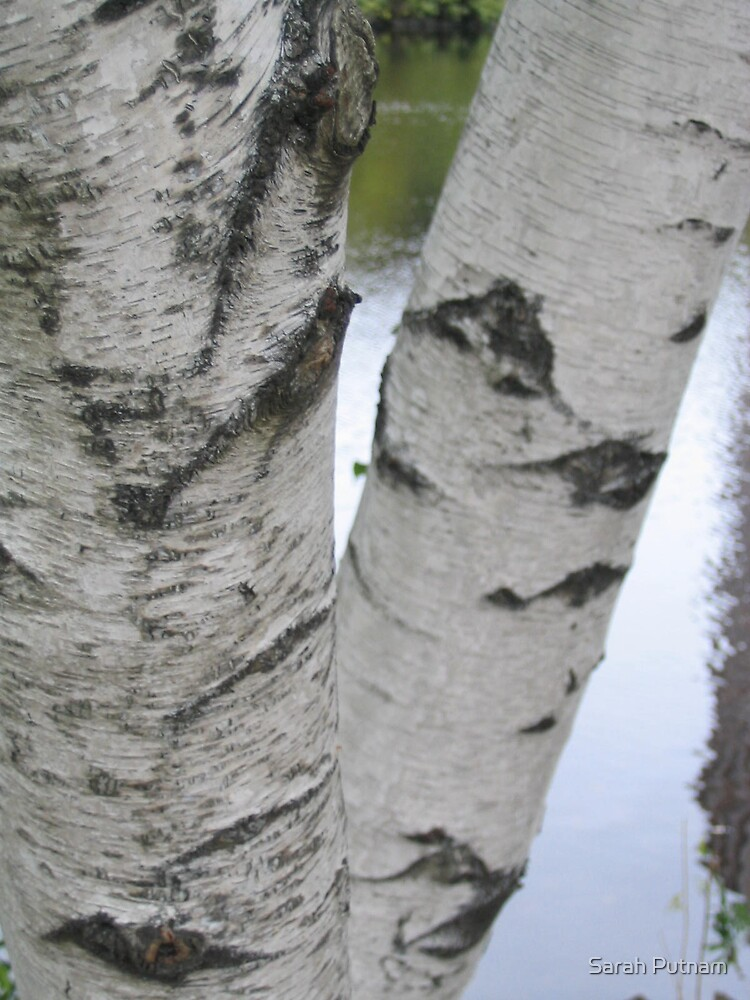 Trees by Sarah Putnam
