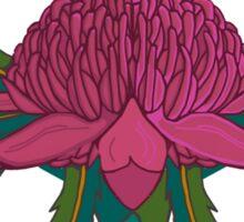 Waratah Flower Australia Sticker
