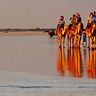Cable Beach Camels by chriso