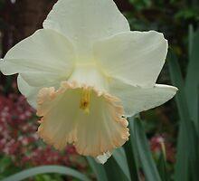 Daffodil by lettie1957