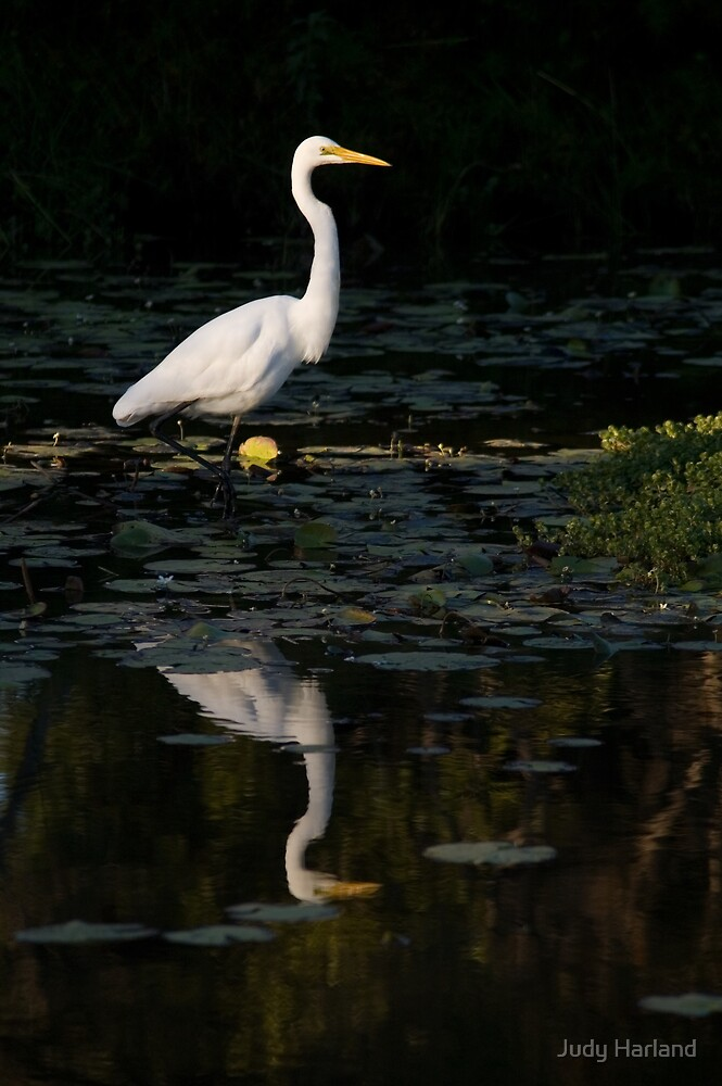 Egret by J Harland