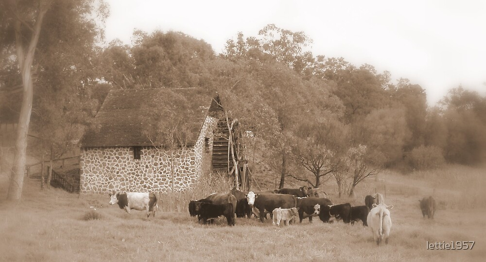 The Old Mill House - Swan Valley - Western Australia  by lettie1957