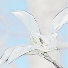 Magnolia - Pillow by julie08