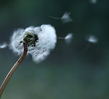 Make a wish... by rhonda reed