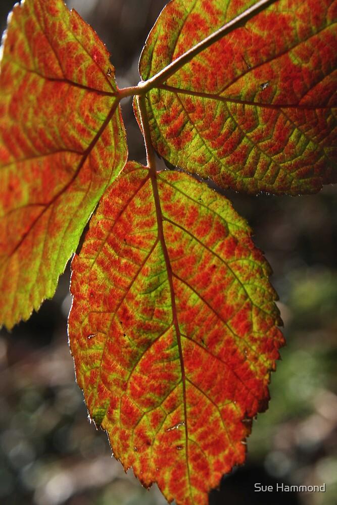 Autumn leaf by Sue Hammond