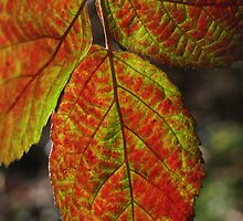 Autumn leaf by Sue Hammond
