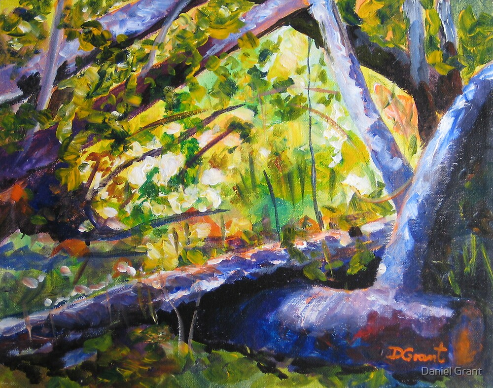 Sunlit Woods  by Daniel Grant