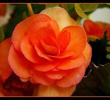rose by Dino Dino