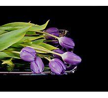 Purple on Silver Photographic Print