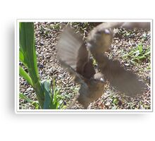 Two Fly Off Together Canvas Print
