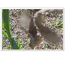 Two Fly Off Together Photographic Print