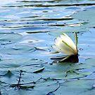 Evening Bloom by Suni Pruett
