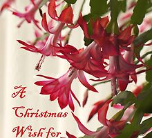 Xmas Cactus Card by Kenneth Hoffman