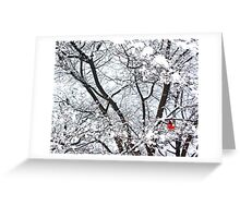 Cardinal in Winter (Central Park) Greeting Card