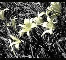 feild of flowers by TABI22