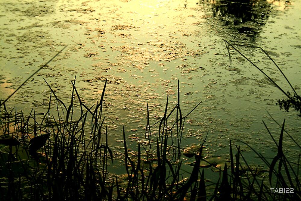 lily pad pond by TABI22