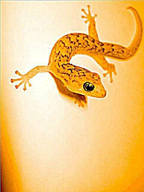gecko by yellowcar9