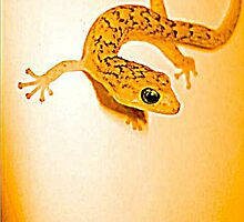 gecko by yellowcar9