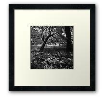 Full summer verdant green, with black veins (ii) - photography Framed Print