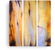 Scribbly Gum Tryptch Canvas Print