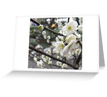 Plum blossom Greeting Card