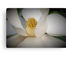 Magnolia macro Canvas Print
