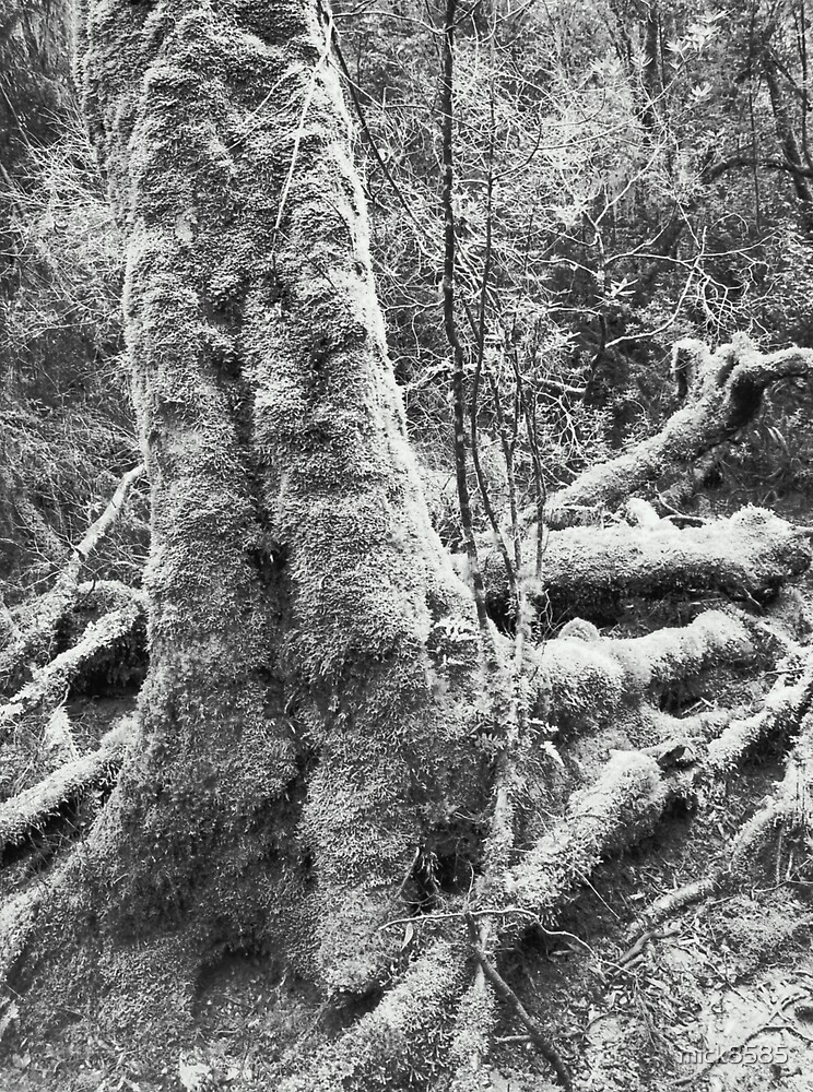 Huon Pine - Heritage Landing by mick8585