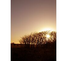Burning Bush Photographic Print