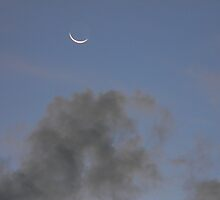 Early Morning Moonlight, Partly Cloudy, Partly Batty by Navigator