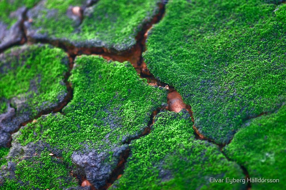 Green mossy rock by Elvar Eyberg Halldórsson