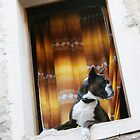 How much is that dogy in the window? by orourke