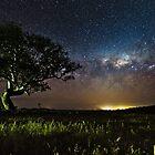 Dunkield Galaxy Tree by pablosvista2