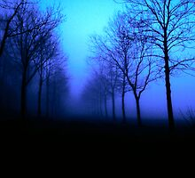 Morning Fog by markophoto