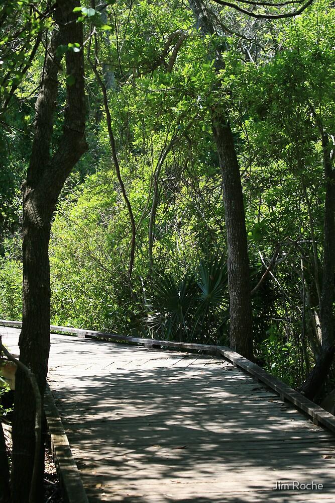 Forest Boardwalk by Jim Roche