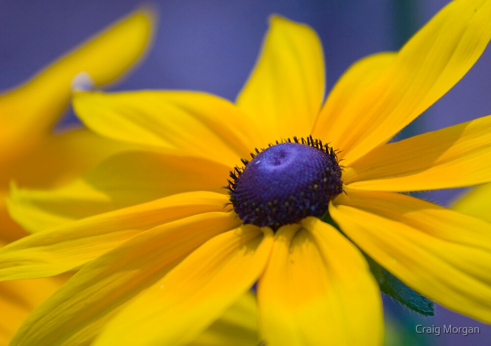 Flower by Craig Morgan