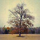 autumn memory by JOSEPHMAZZUCCO