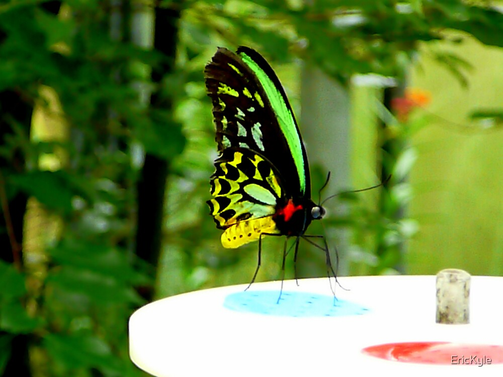 NATURE BUTTERFLIES 3 by EricKyle