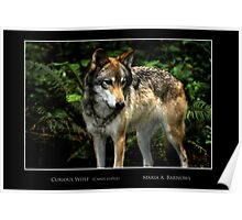 Curious Wolf - Cool Stuff Poster
