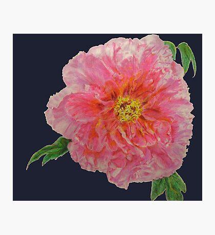Pink Peony Flower Pattern Navy Print Photographic Print
